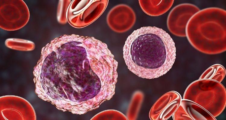 Linfocitos: tipos, funciones y enfermedades relacionadas