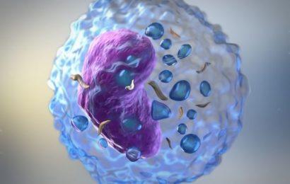 Linfocitos altos: Qué significa y cómo se pueden bajar
