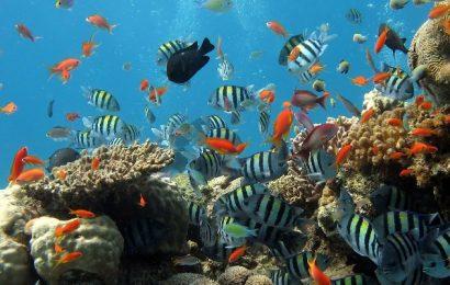 El mundo ha perdido el 14% de los arrecifes de coral a causa del aumento de la temperatura del mar